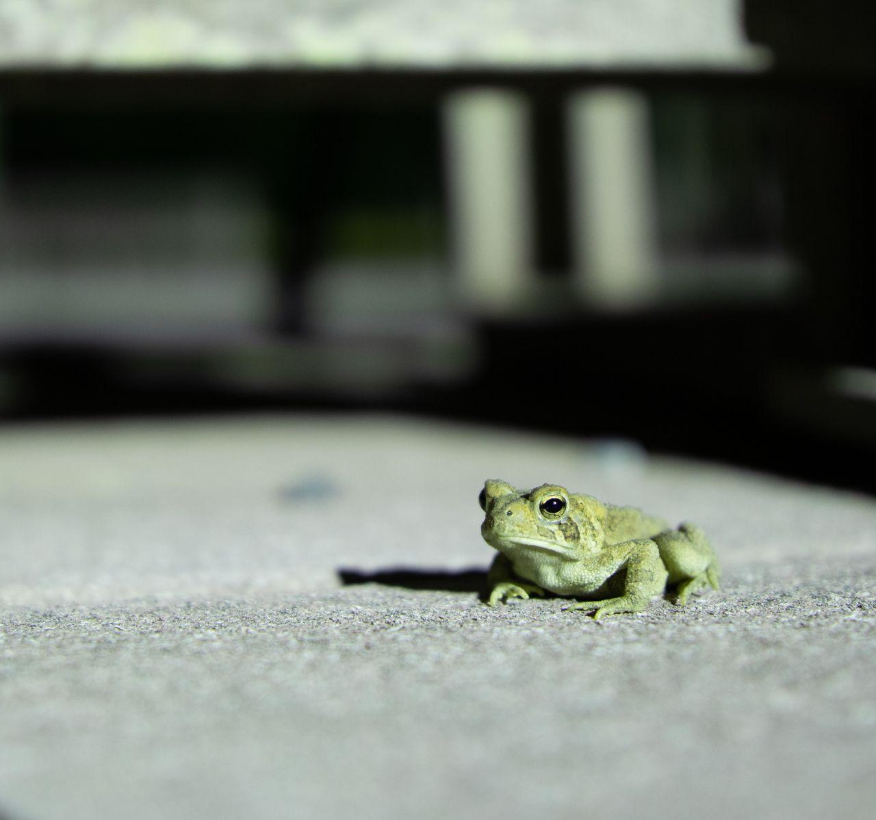 Corpse Run 984.5: Frog!